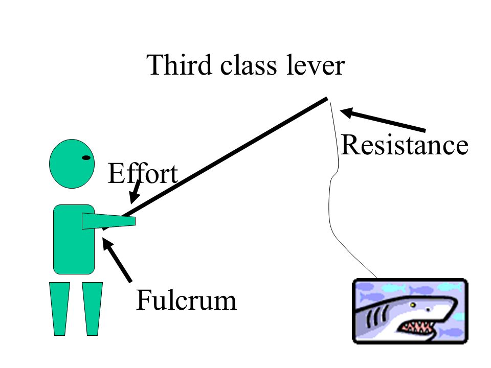 Third class lever Resistance Effort Fulcrum