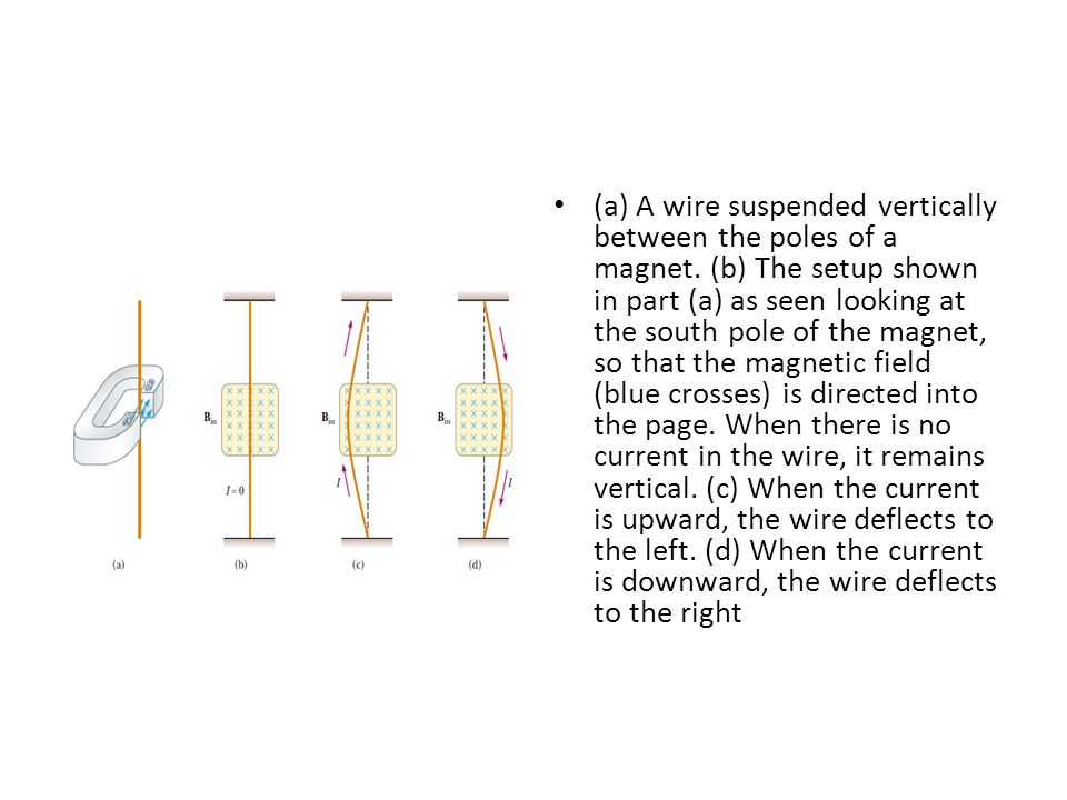 (a) A wire suspended vertically between the poles of a magnet