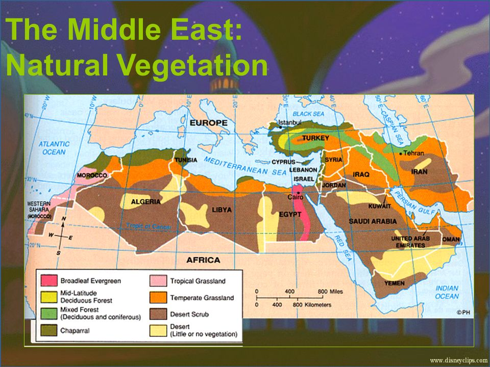 The Middle East: Natural Vegetation