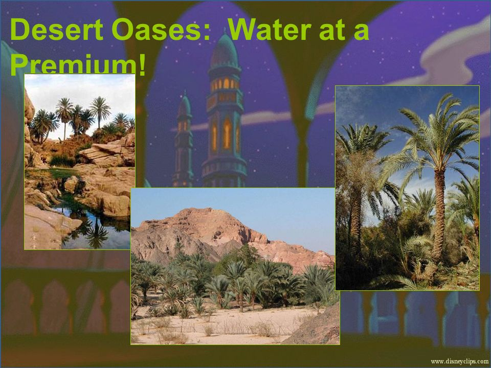 Desert Oases: Water at a Premium!