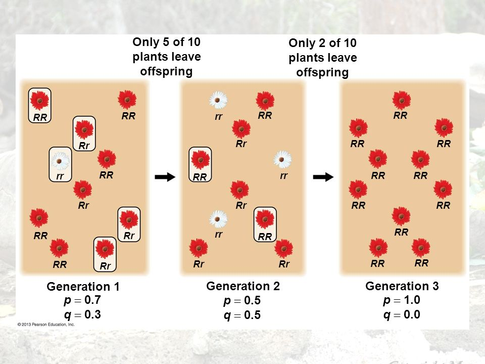 Only 5 of 10 plants leave offspring Only 2 of 10 plants leave