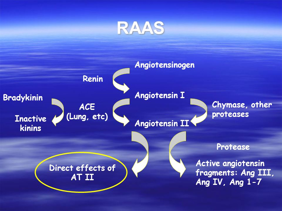RAAS Angiotensinogen Renin Angiotensin I Bradykinin