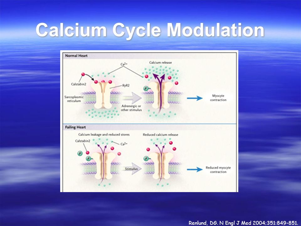 Calcium Cycle Modulation