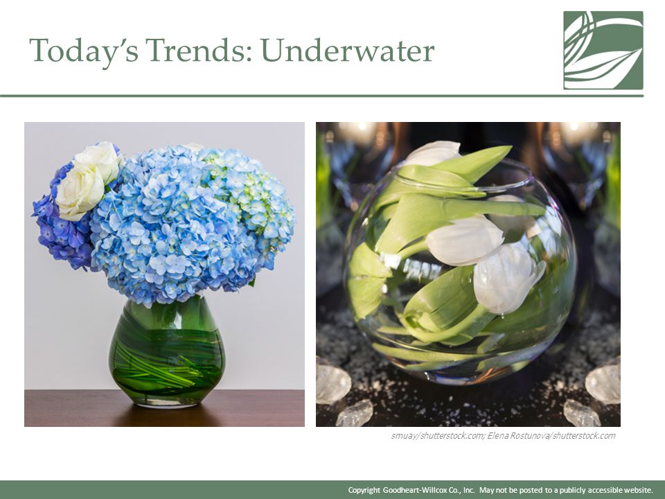 Today's Trends: Underwater