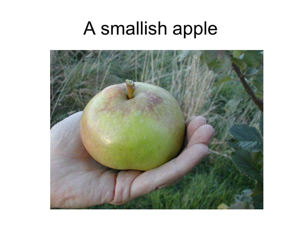A smallish apple