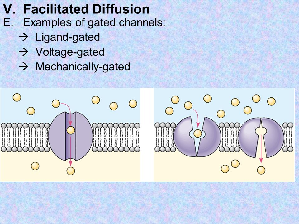 V. Facilitated Diffusion