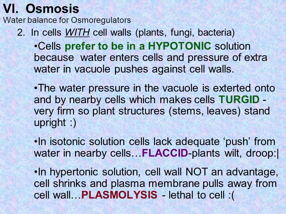 VI. Osmosis 2. In cells WITH cell walls (plants, fungi, bacteria)