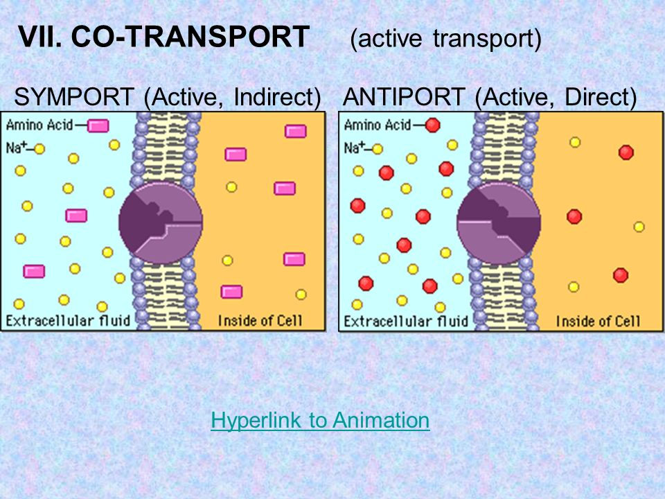 VII. CO-TRANSPORT (active transport)