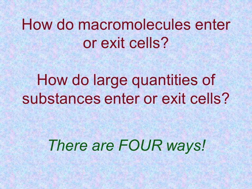 How do macromolecules enter or exit cells