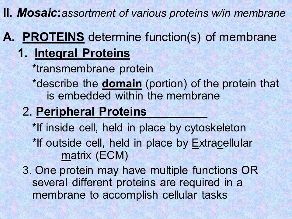 II. Mosaic:assortment of various proteins w/in membrane