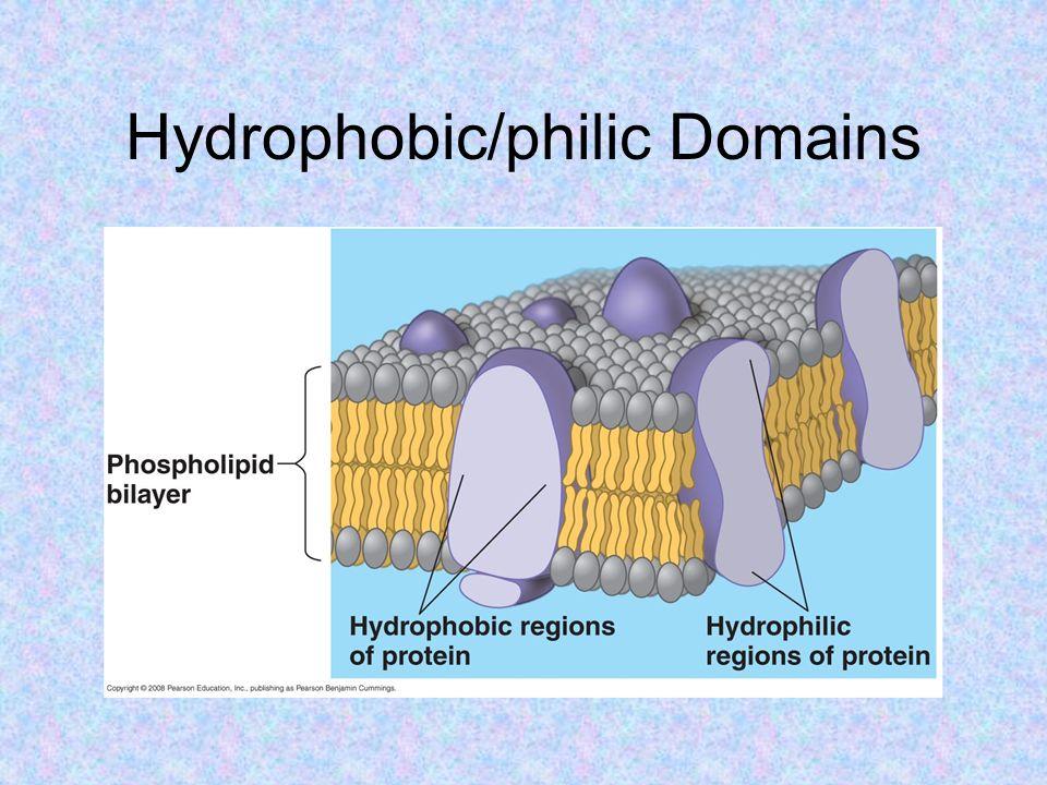 Hydrophobic/philic Domains