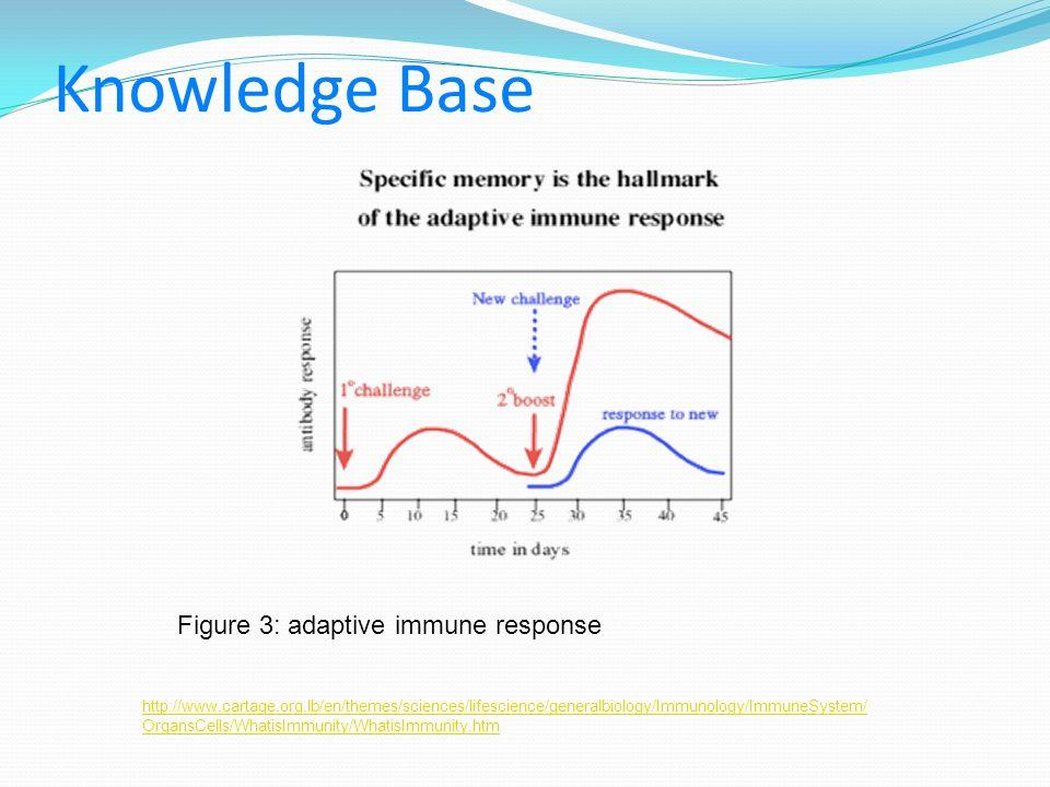 Knowledge Base Figure 3: adaptive immune response