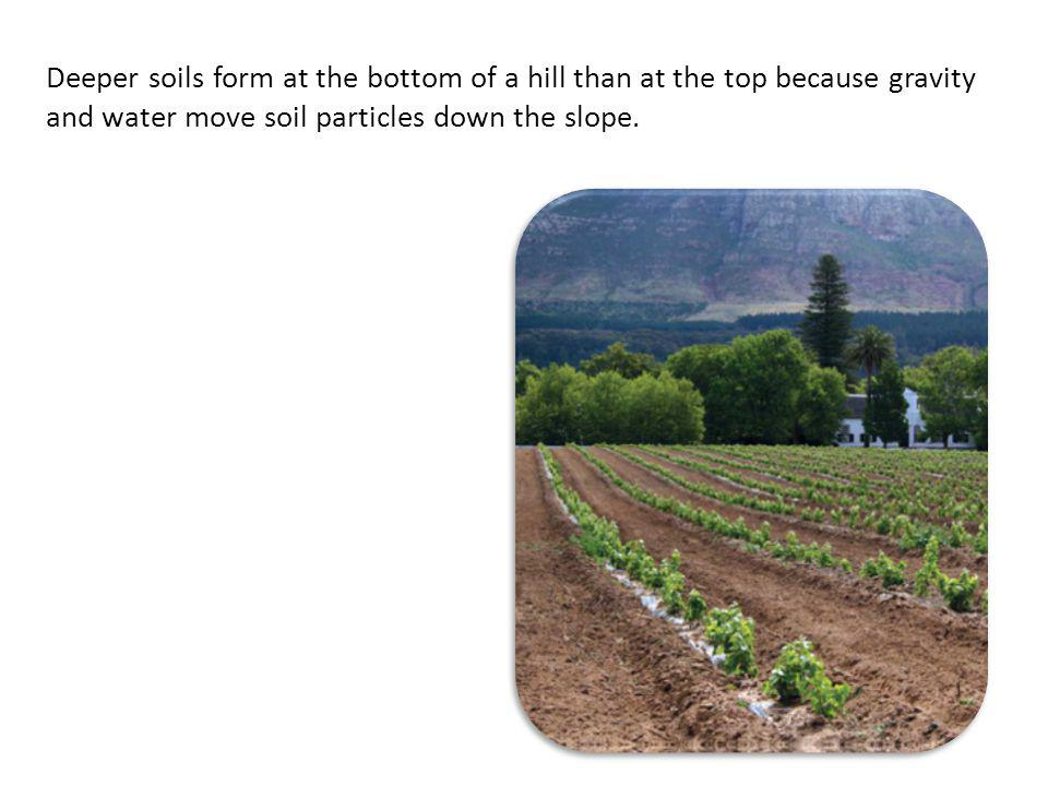 Deeper soils form at the bottom of a hill than at the top because gravity and water move soil particles down the slope.