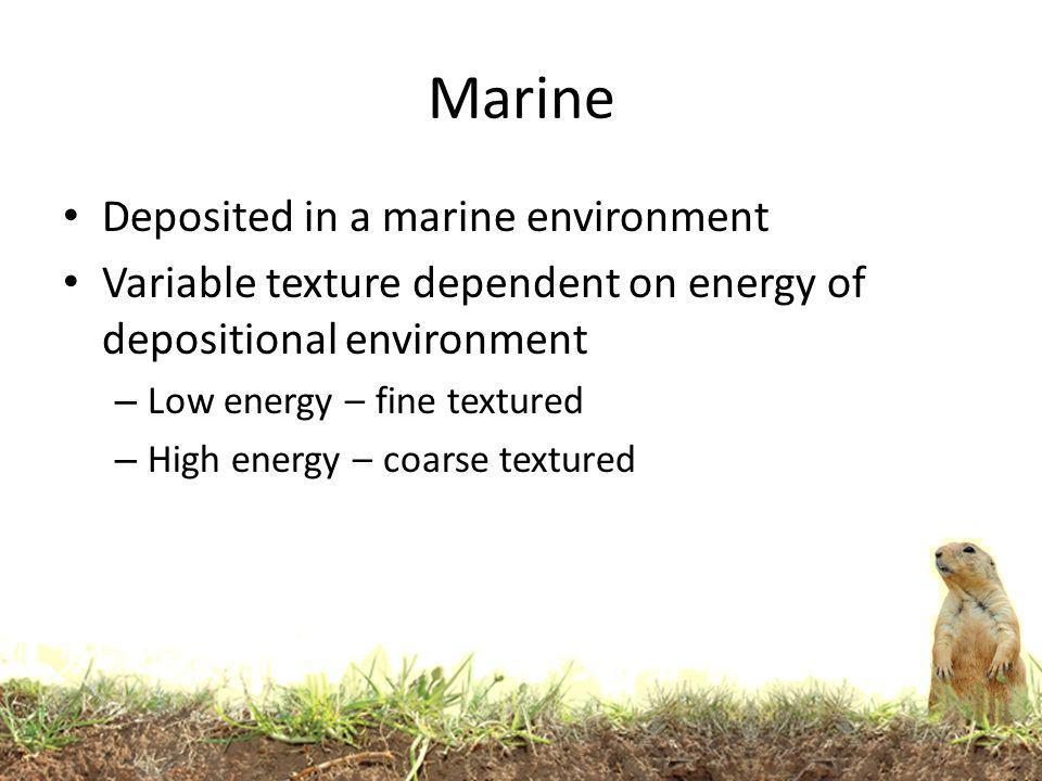 Marine Deposited in a marine environment