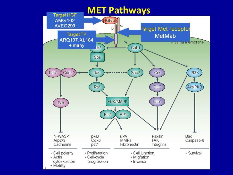 MET Pathways Target Met receptor MetMab Target HGF AMG 102 AVEO299