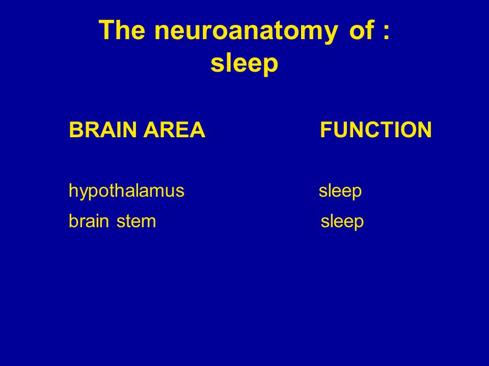 The neuroanatomy of : sleep
