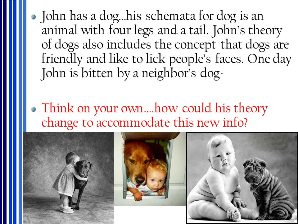 John has a dog…his schemata for dog is an animal with four legs and a tail. John's theory of dogs also includes the concept that dogs are friendly and like to lick people's faces. One day John is bitten by a neighbor's dog-