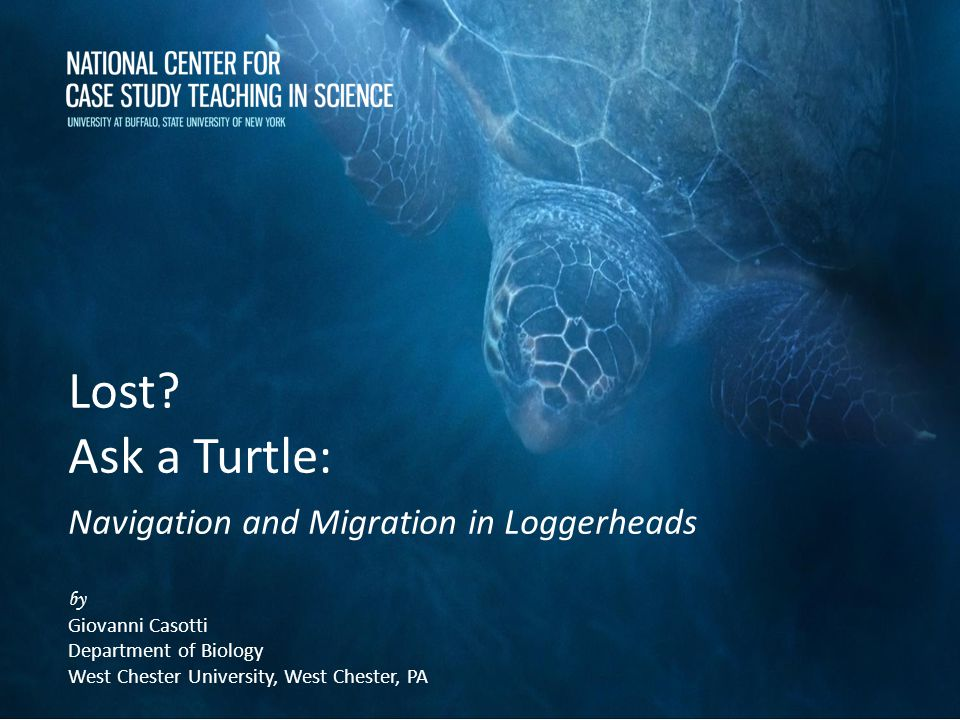 Lost Ask a Turtle: Navigation and Migration in Loggerheads by