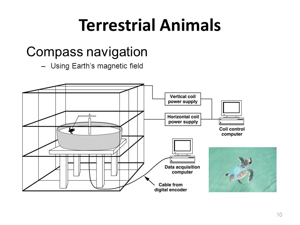 Terrestrial Animals Compass navigation Using Earth's magnetic field