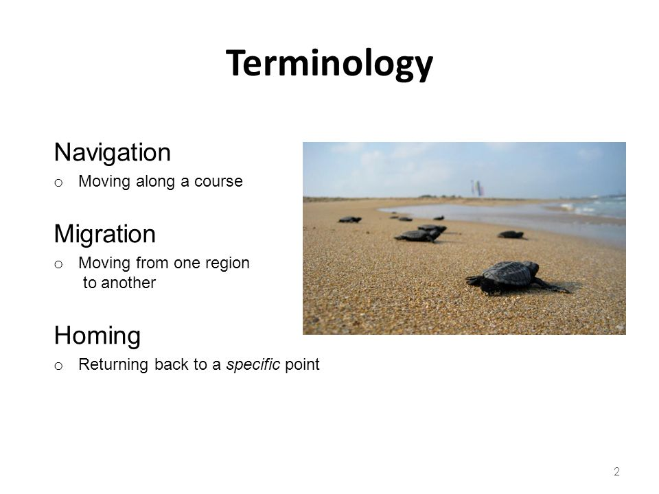 Terminology Navigation Migration Homing Moving along a course
