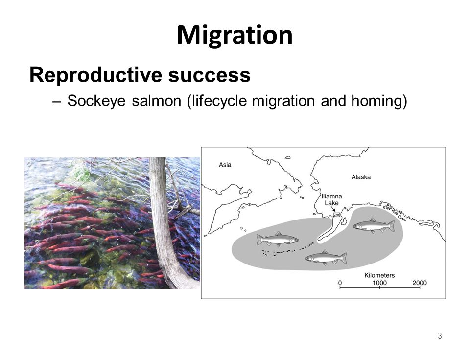 Migration Reproductive success