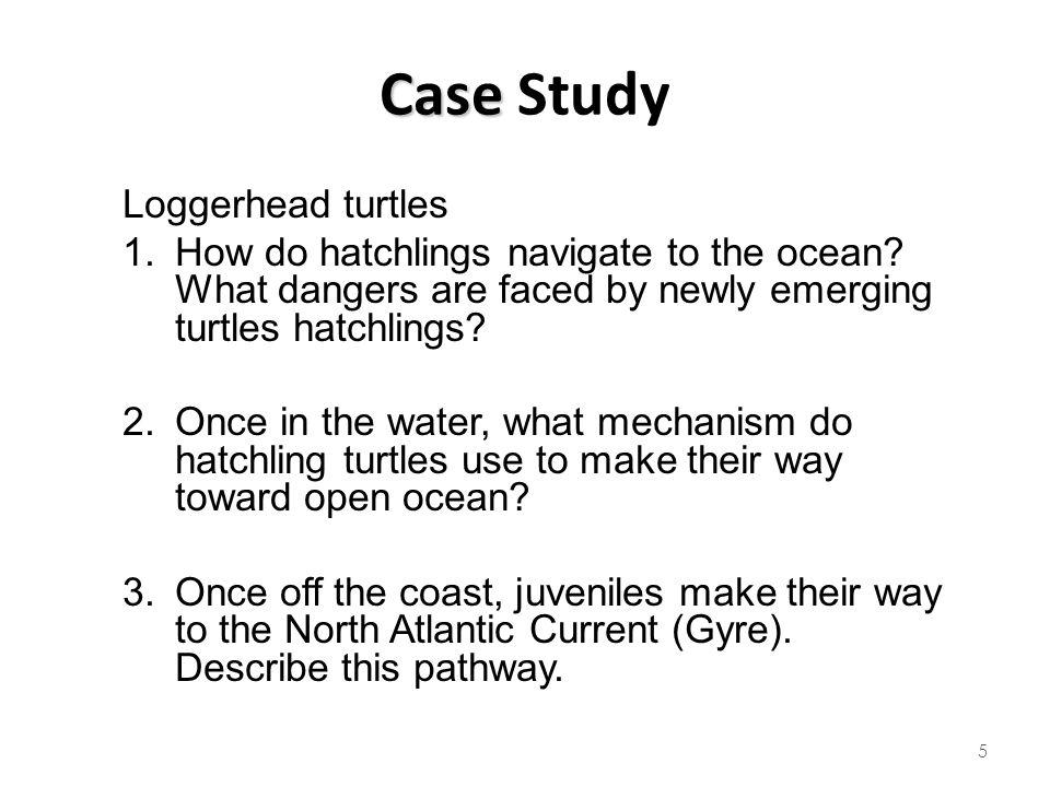 Case Study Loggerhead turtles
