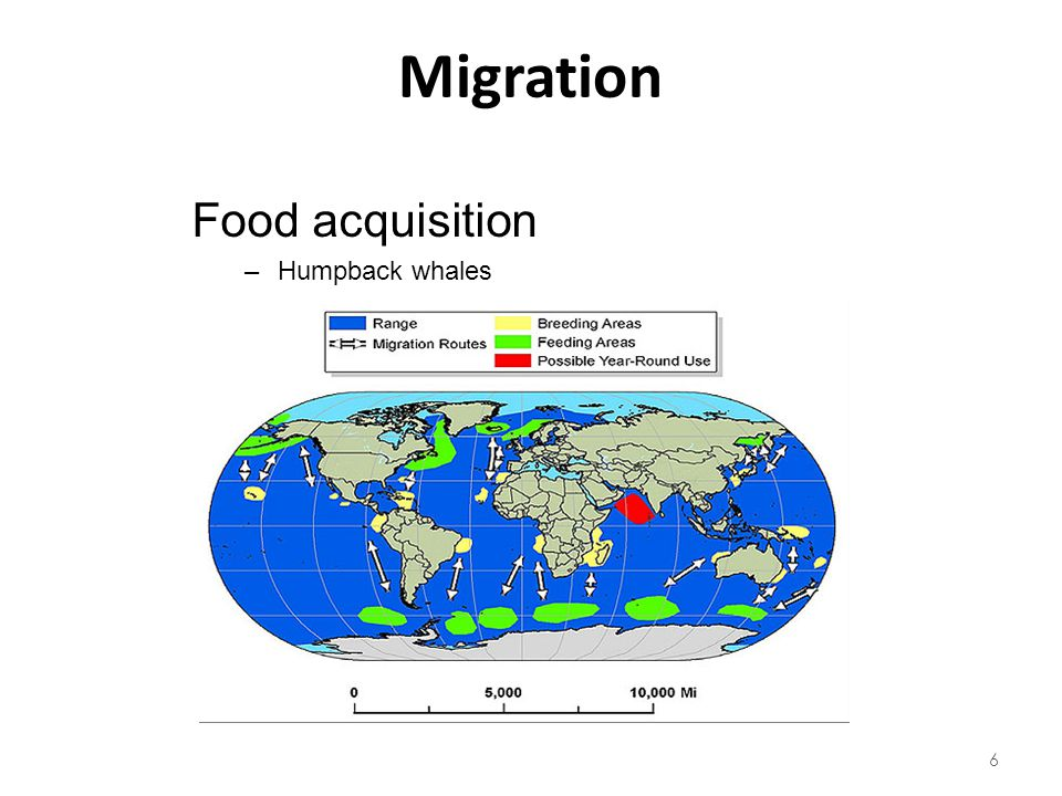 Migration Food acquisition Humpback whales