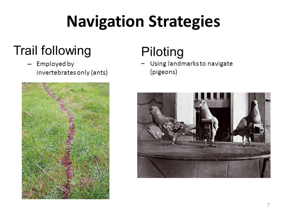 Navigation Strategies