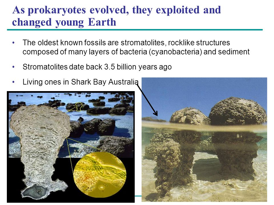 As prokaryotes evolved, they exploited and changed young Earth