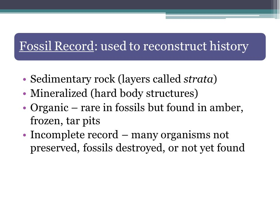 Fossil Record: used to reconstruct history