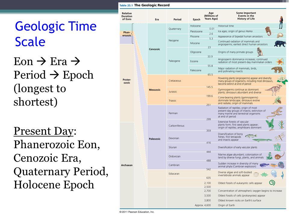 Geologic Time Scale Eon  Era  Period  Epoch (longest to shortest) Present Day: Phanerozoic Eon, Cenozoic Era, Quaternary Period, Holocene Epoch