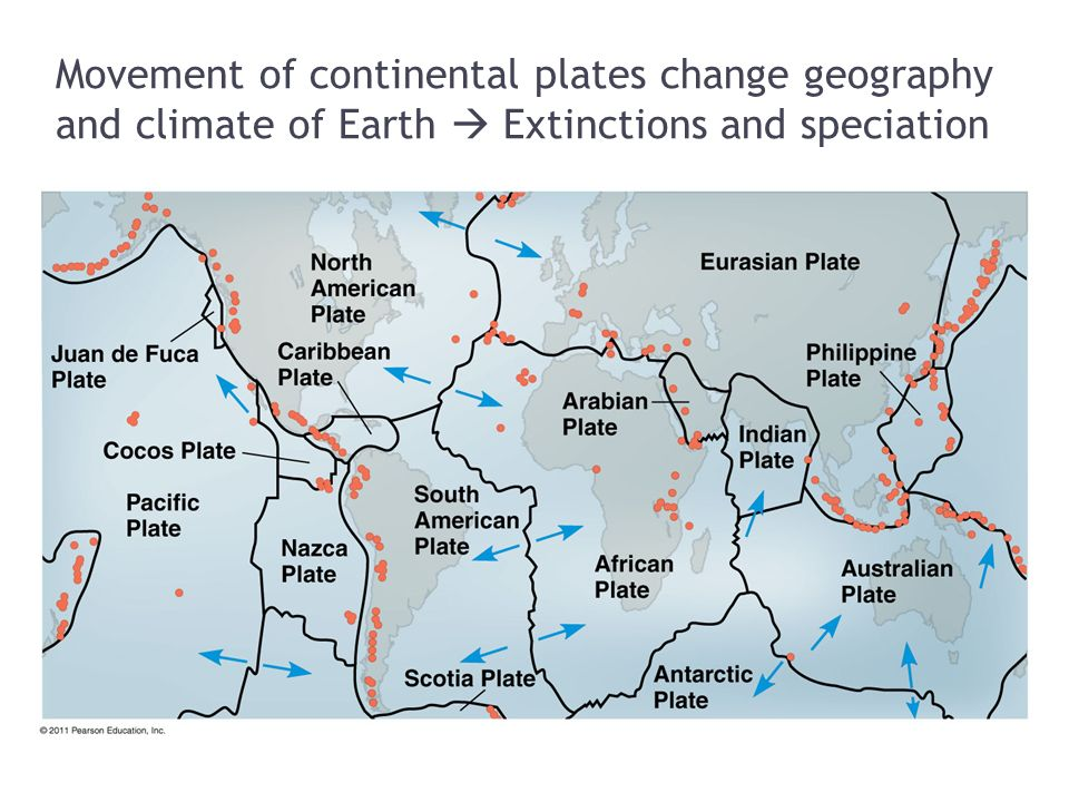 Movement of continental plates change geography and climate of Earth  Extinctions and speciation