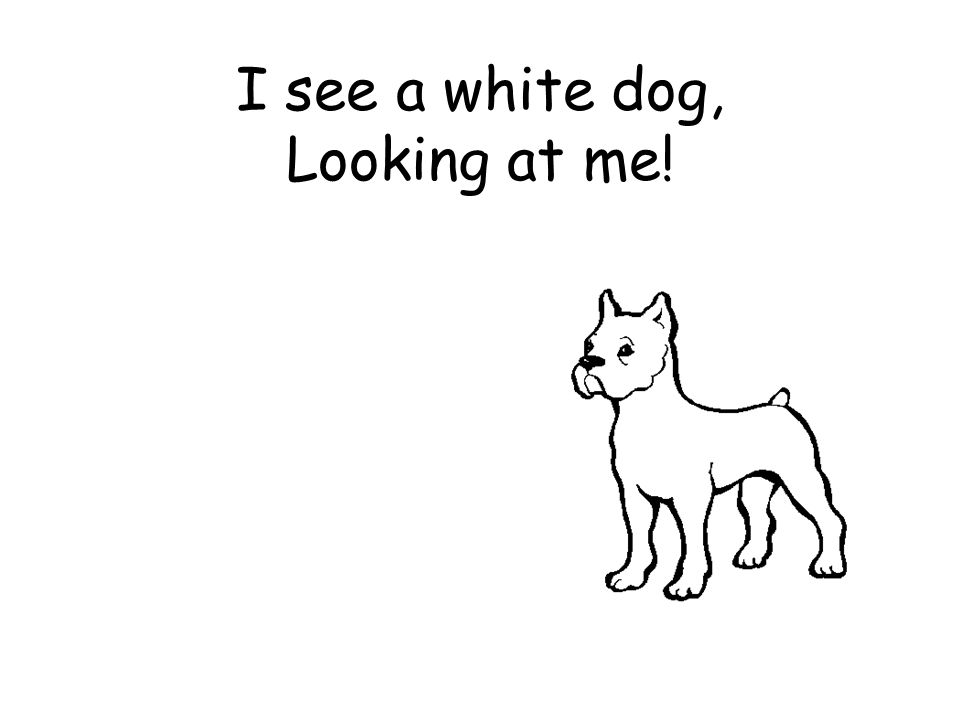I see a white dog, Looking at me!