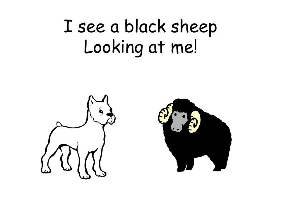 I see a black sheep Looking at me!