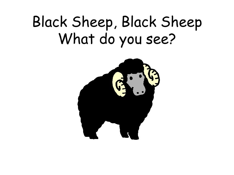 Black Sheep, Black Sheep What do you see