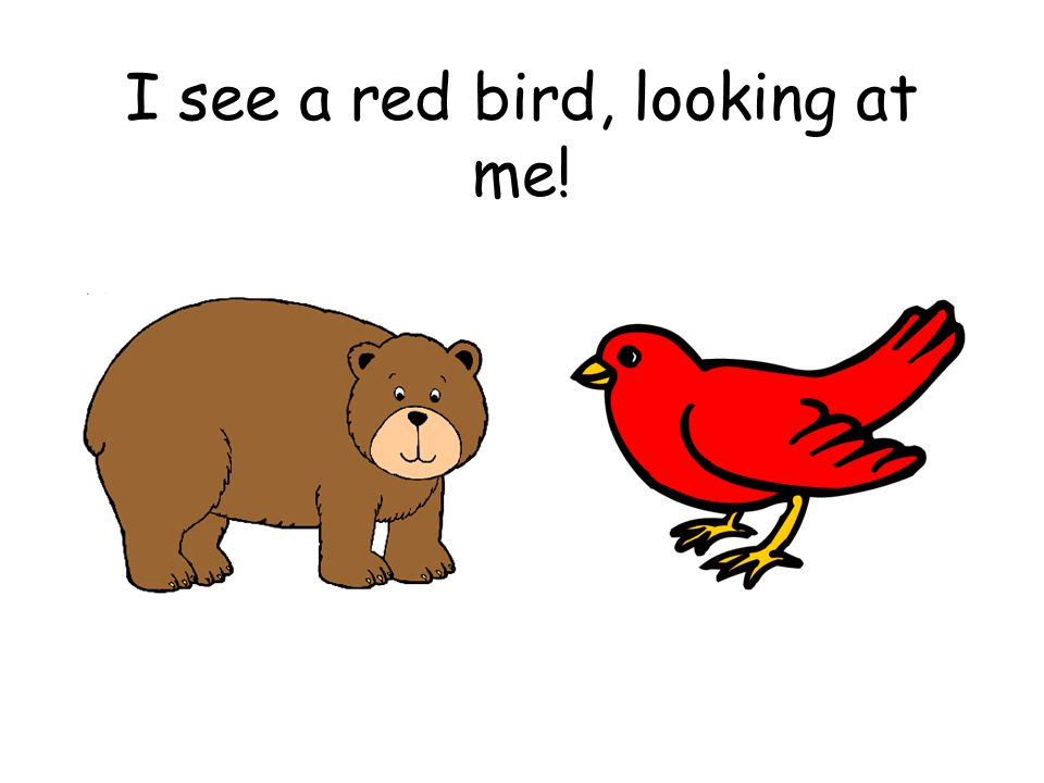 I see a red bird, looking at me!