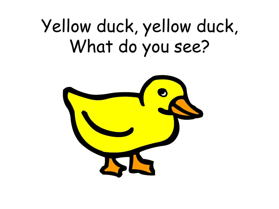 Yellow duck, yellow duck, What do you see