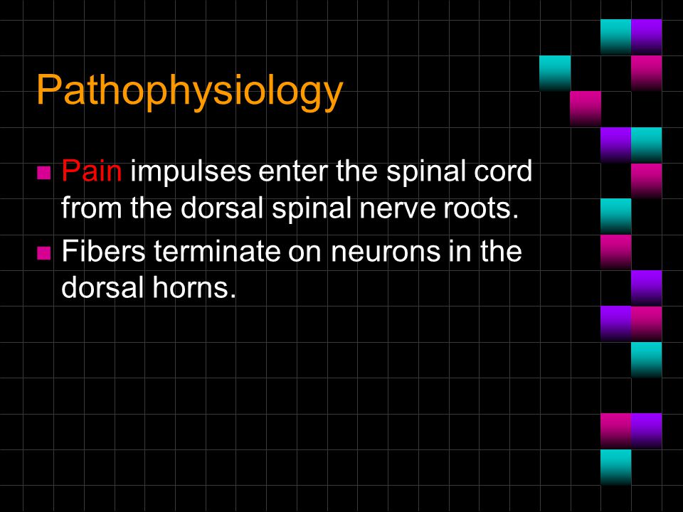 Pathophysiology Pain impulses enter the spinal cord from the dorsal spinal nerve roots.