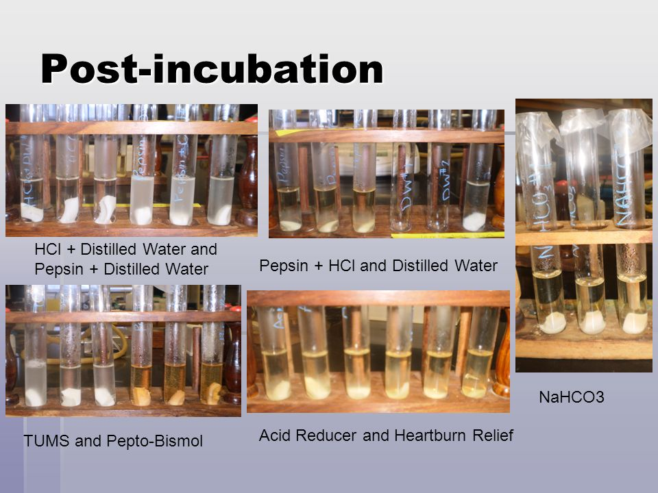 Post-incubation HCl + Distilled Water and Pepsin + Distilled Water