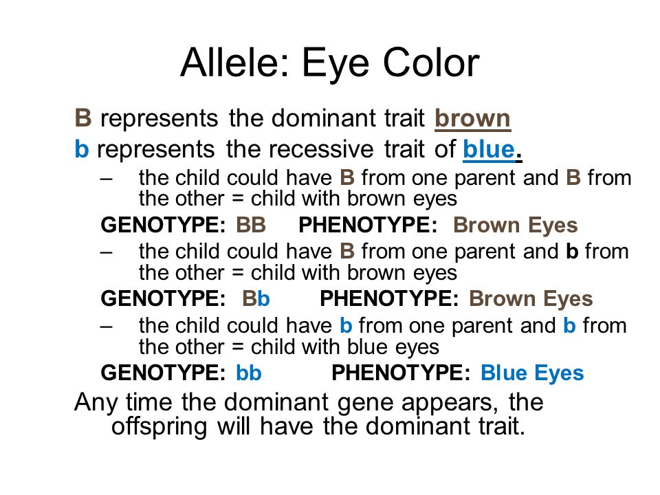 Allele: Eye Color B represents the dominant trait brown