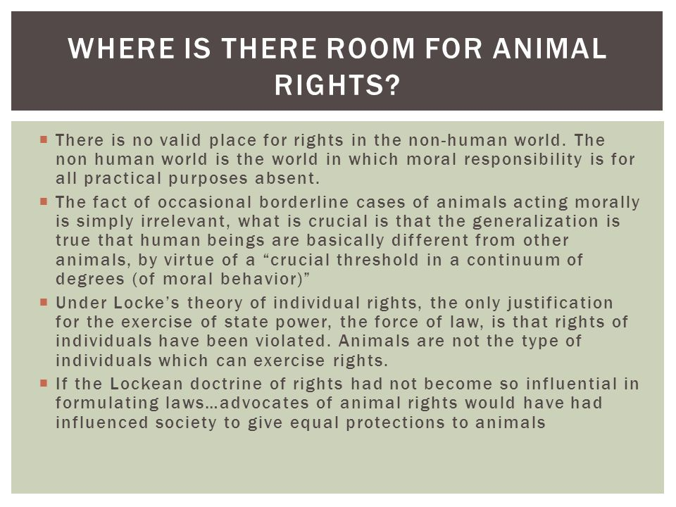 Where is there room for Animal Rights