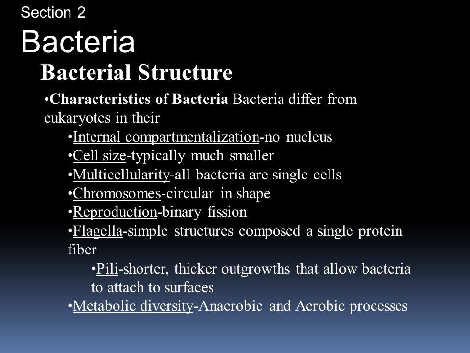 Bacteria Bacterial Structure Section 2