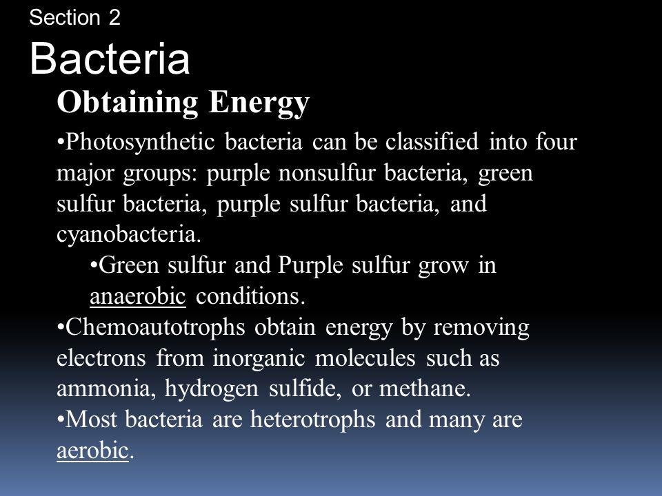 Bacteria Obtaining Energy