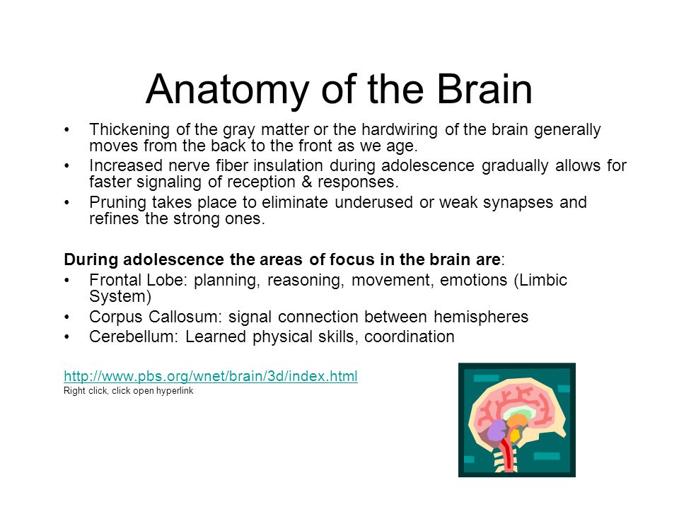 Anatomy of the Brain Thickening of the gray matter or the hardwiring of the brain generally moves from the back to the front as we age.