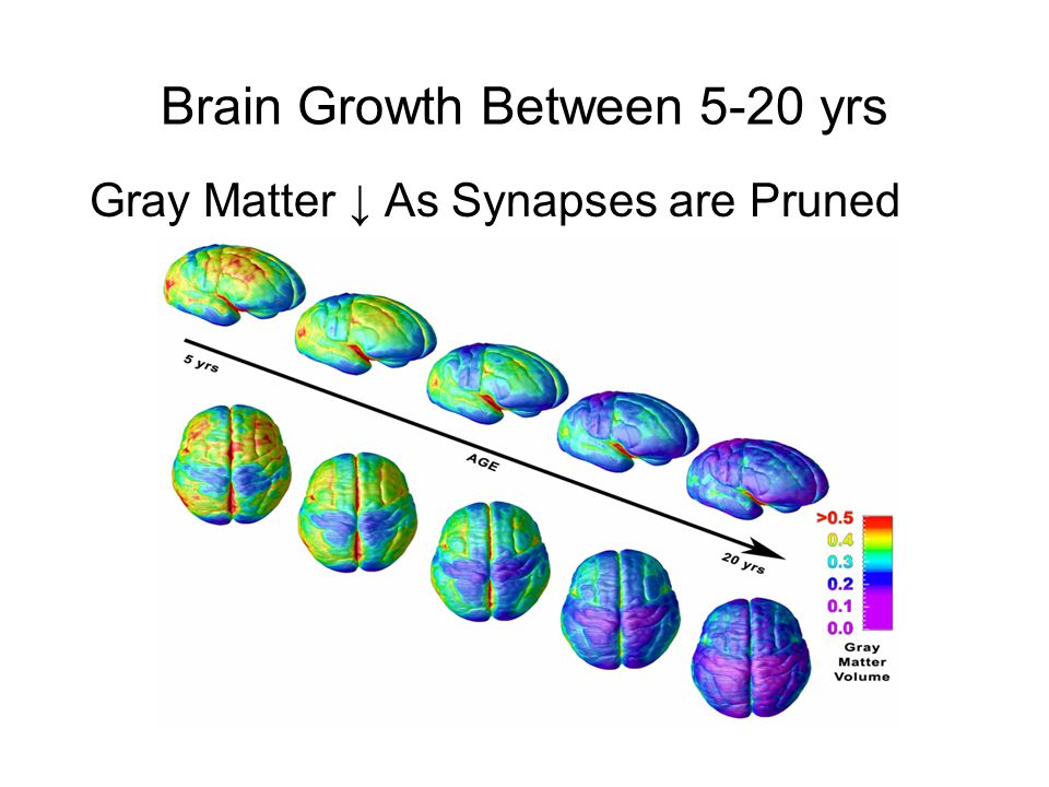 Brain Growth Between 5-20 yrs