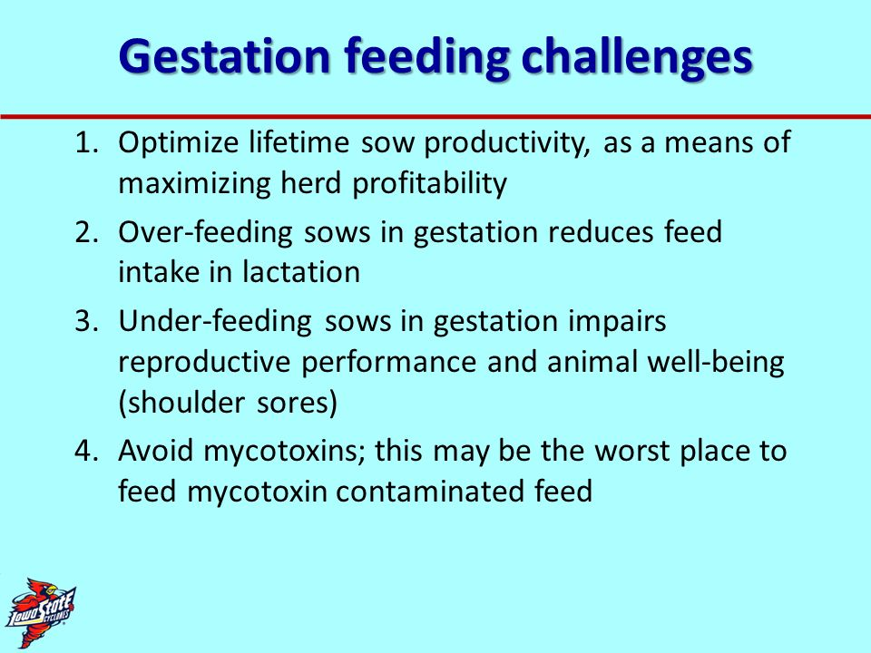 Gestation feeding challenges
