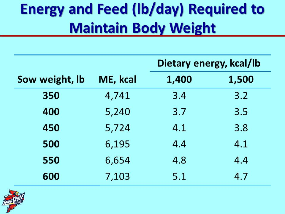 Energy and Feed (lb/day) Required to Maintain Body Weight