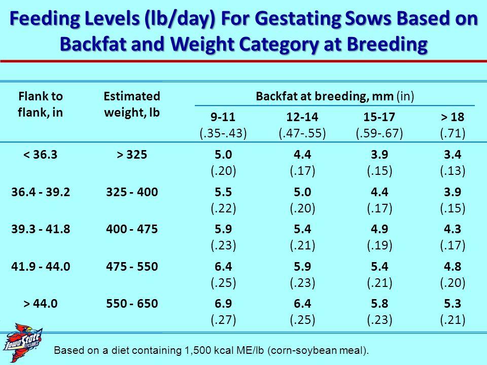Backfat at breeding, mm (in)