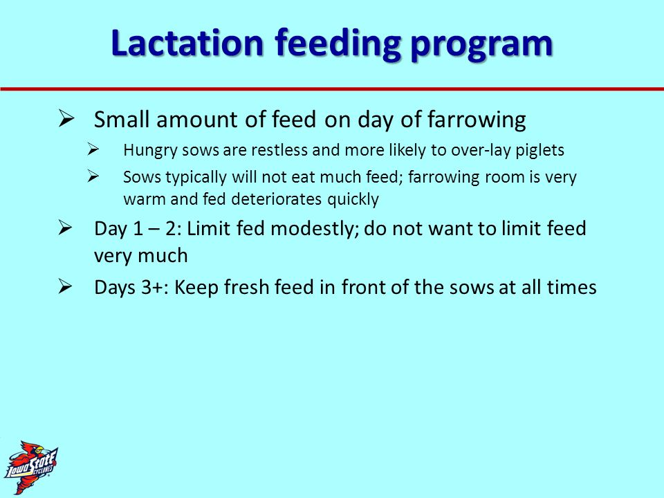 Lactation feeding program