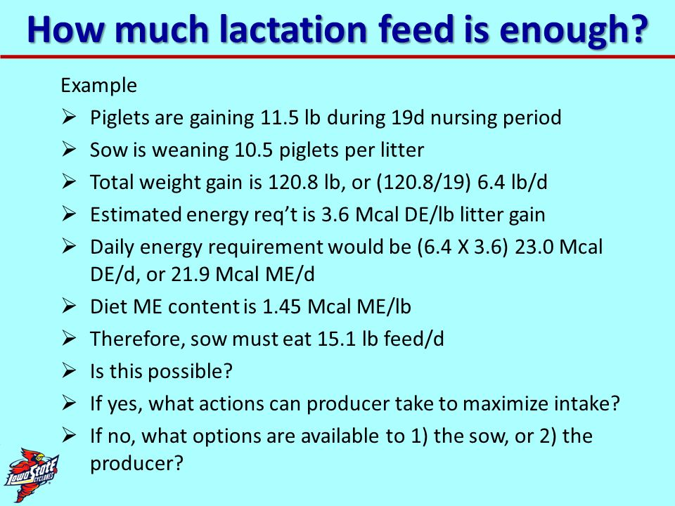 How much lactation feed is enough